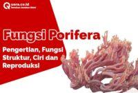 Fungsi Porifera